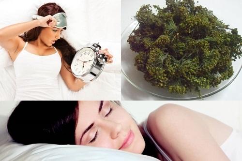 Hoa tam thất – Thần dược trị mất ngủ người mất ngủ kinh niên cần thử ngay
