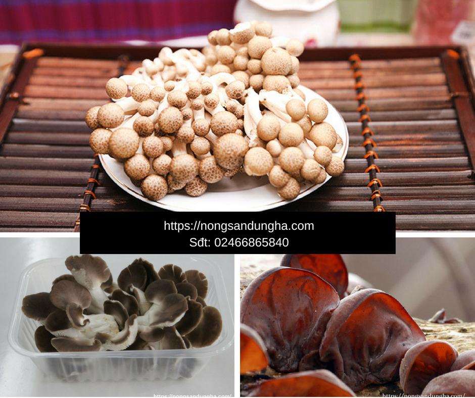 Top 3 loại nấm có công dụng chữa bệnh tốt nhất