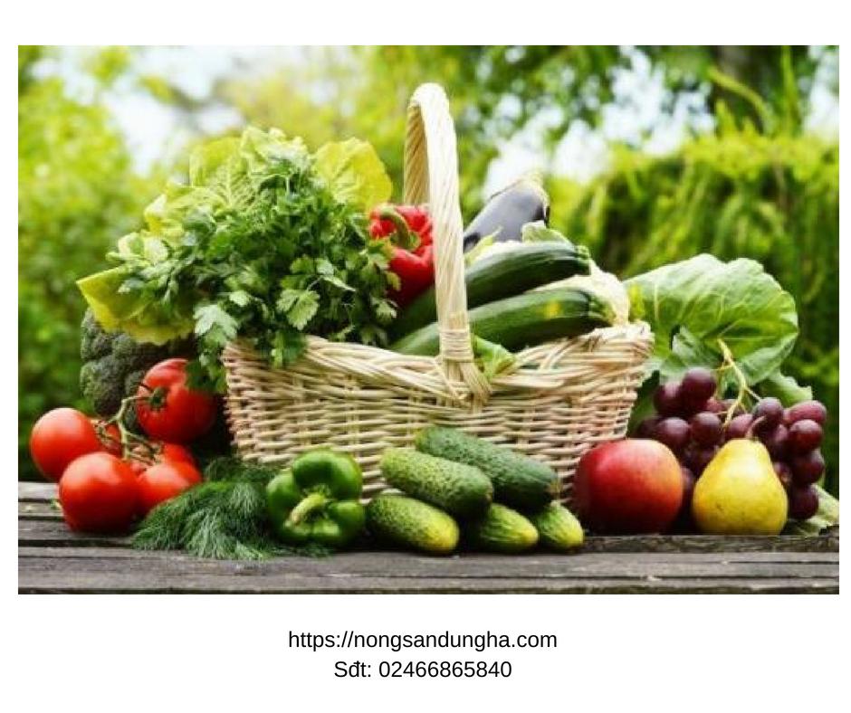 Top 3 loại hạt giống rau, quả dễ trồng và giải nhiệt tốt nhất vào mùa hè