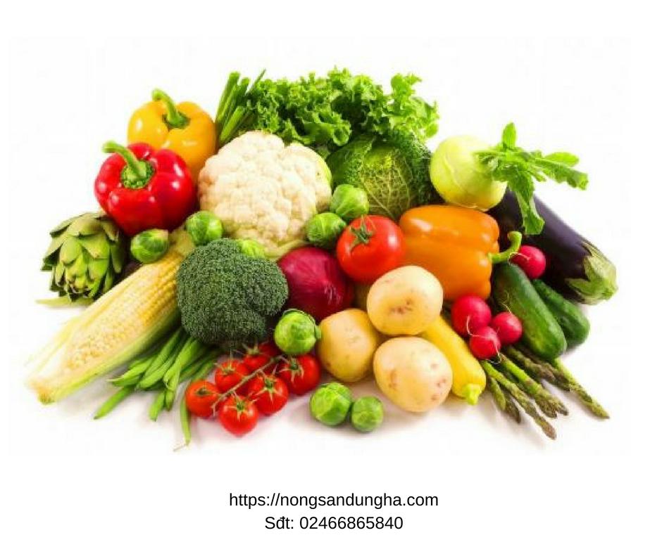 Top 5 địa chỉ bán hạt giống rau sạch chất lượng nhất Hà Nội