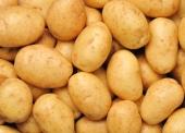 khoai tây vàng