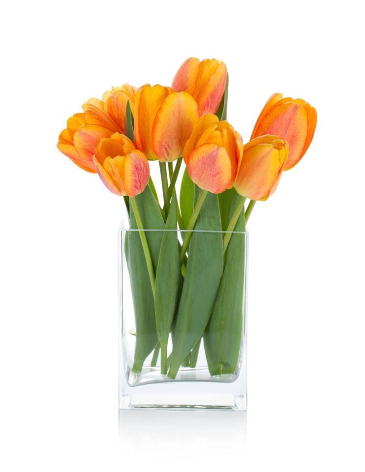 tulip-cam