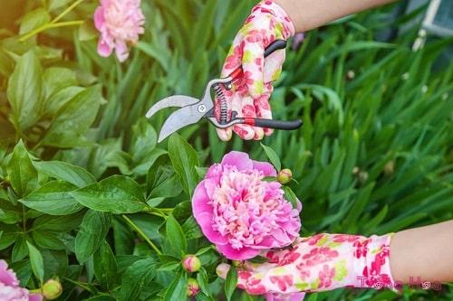 ngắt hoa