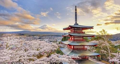 Hoa anh đào và 15 địa điểm ngắm hoa anh đào gợi ý tại Nhật