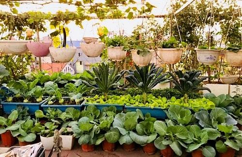 địa chỉ bán hạt giống rau ở Hà Nội