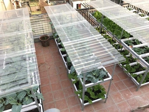lưu ý trồng rau mùa mưa
